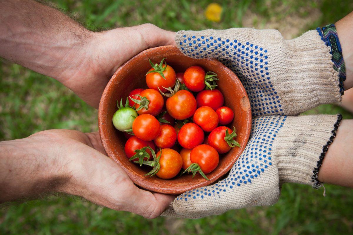 El arte de cultivar en casa: 6 datos clave para hacer tu propio huerto
